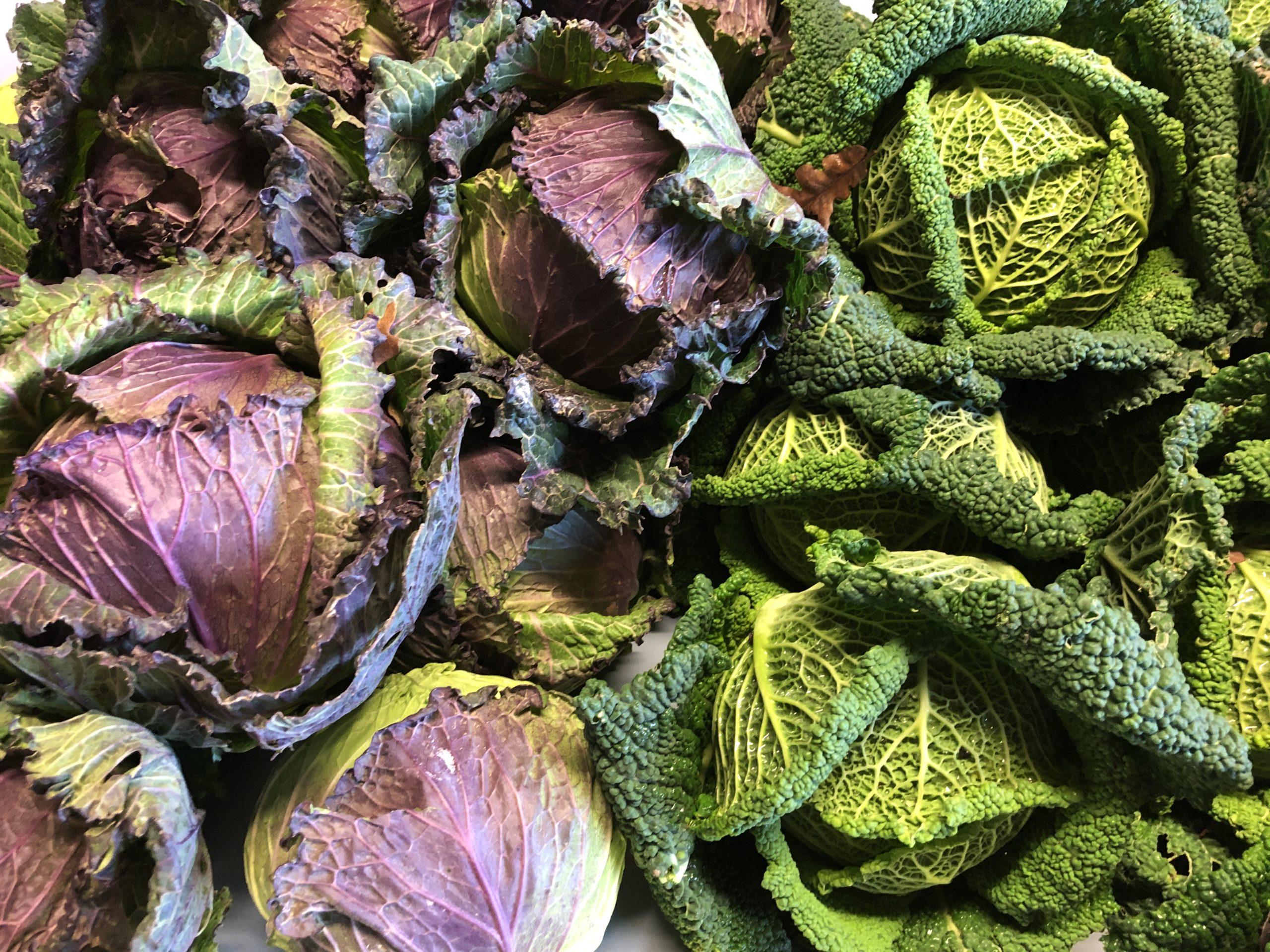 Le chou pommé, le légume pour rester en forme
