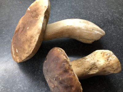 Photo de recette de  cèpes , comment les conserver, comment les préparer, congeler des cèpes, Kilomètre-0, blog de cuisine réalisée à partir de produits de saison et issus de circuits courts